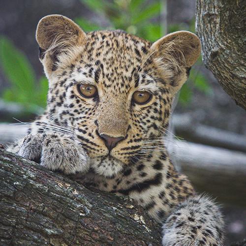 foto-safari-6